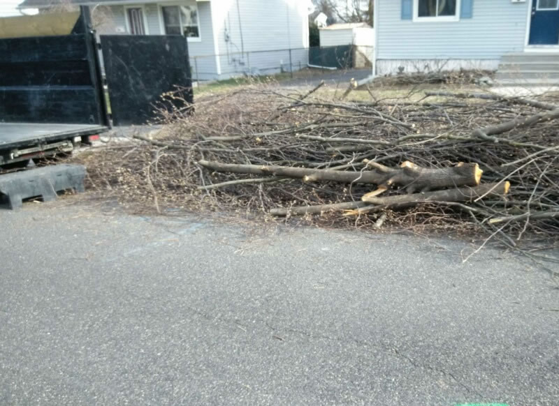 south-jersey-storm-cleanup-branch-limbs-removal-quotes