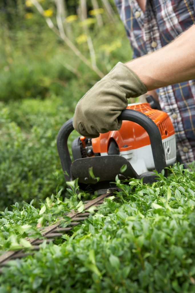 south jersey trimming hedges companies