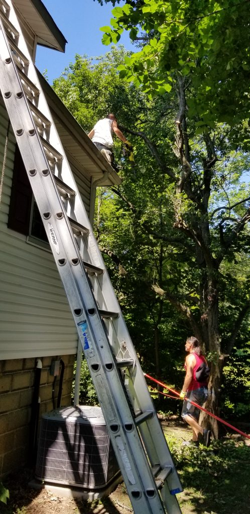 gutter-roof-tree-branches-pruning-south-jersey-asap